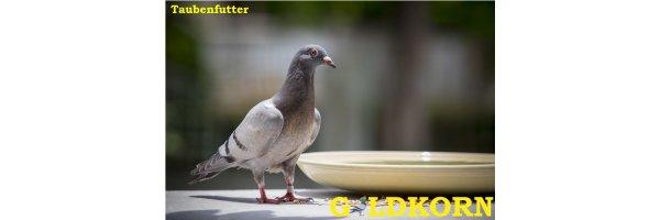 Taubenfutter