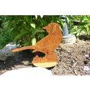 Vogel Blue Jay Blauhäher Edelrost